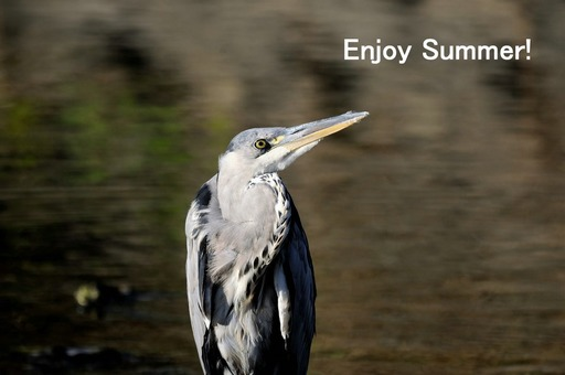 20120805_170928000Enjoy Summer 1.JPG