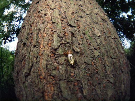 P6242873蜘蛛-s.jpg